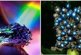 خوش آب و رنگ ترین میوه دنیا+عکس