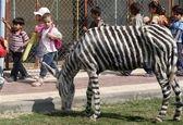 کار عجیب در باغ وحش مصر با خر + عکس