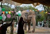 خواننده پاپ غمگین ترین فیل جهان را نجات داد +عکس