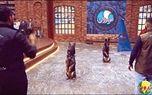 تبلیغ تربیت سگ در تلویزیون +عکس