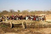 عکس حیرت آور از یک تمساح غول پیکر و غیر طبیعی