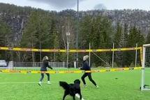 ویدئوی جالب از سگ والیبالیست همه را شگفتزده کرد! +عکس
