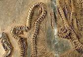 کشف قدیمیترین فسیل مار +عکس