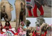 کار متفاوت زنان هندی برای محافظت از فیلها+عکس