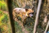 صحنه ای که گردشگر را در باغ وحش شوکه کرد! +عکس